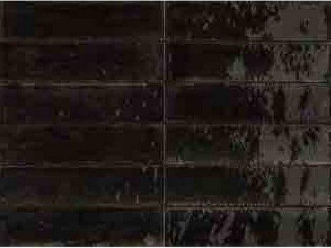 sort sildebensflise